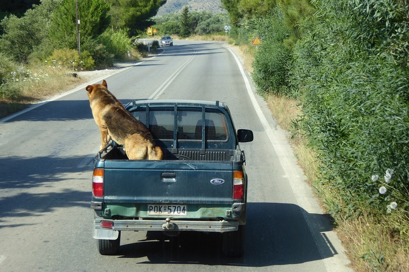 5 Best & Safest Ways to Travel with a Dog in a Ute Car